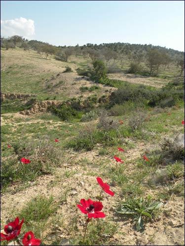 Round Beersheva Trail