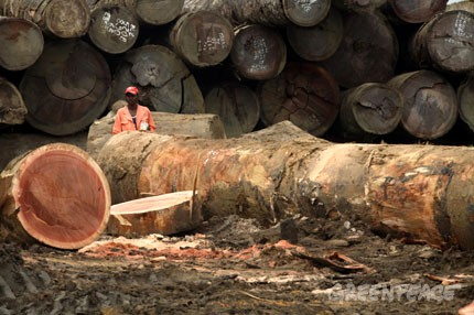 Deforestazione Congo
