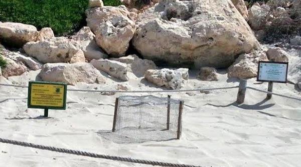 Lampedusa tartarughe