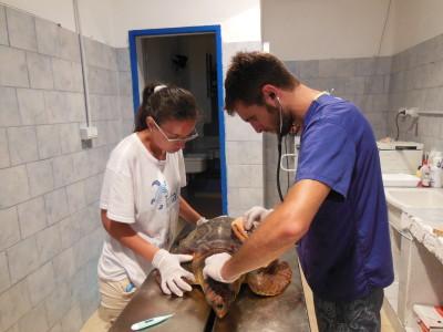 Volontari tartarughe Linosa