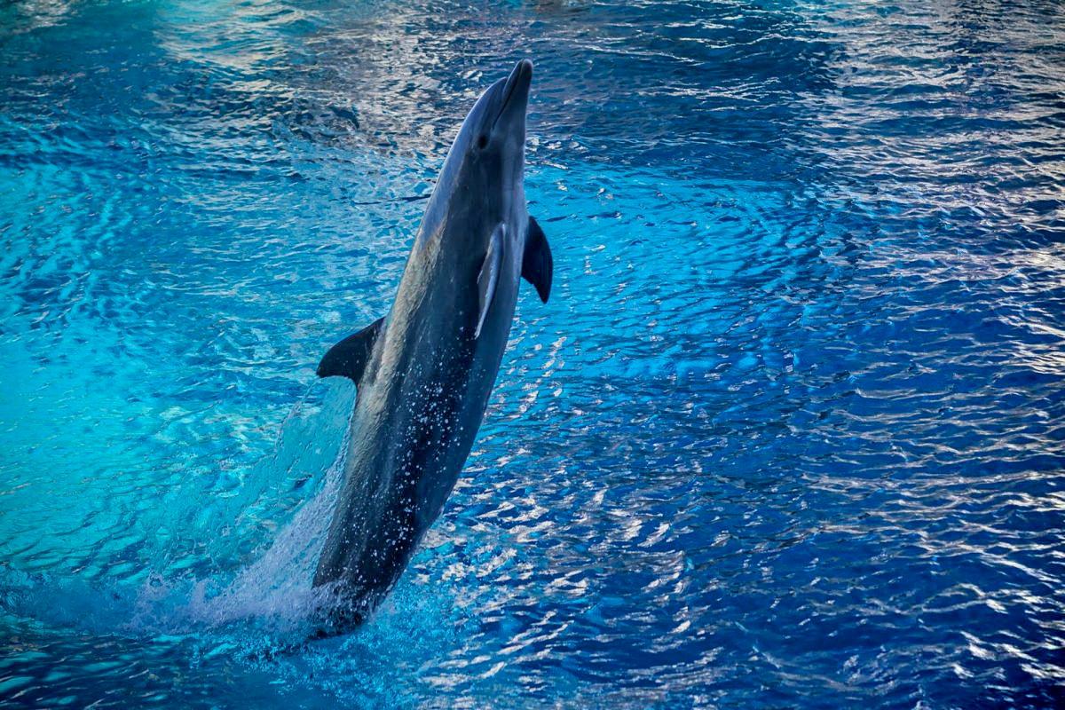 Via libera al bagno con i delfini nei parchi acquatici - Bagno coi delfini ...